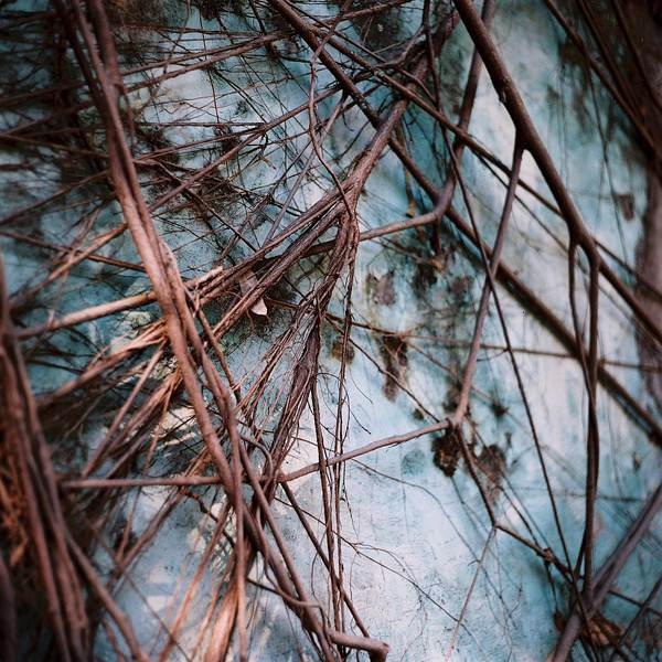 """""""Growth"""" - Lomography Color Negative 400 at EI 400."""