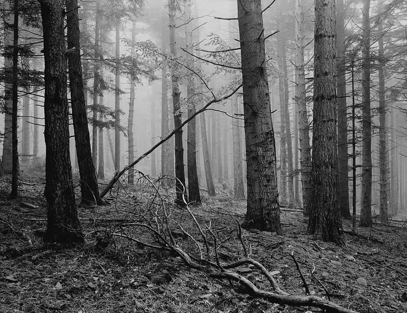 Forest and fog. Pentax 67II Pentax 55mm f4 Fomapan 100 Classic — Appennino Tosco Emiliano, Italy.
