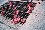 Grate pinks - Lucky Color Film Super 200 shot at ISO200