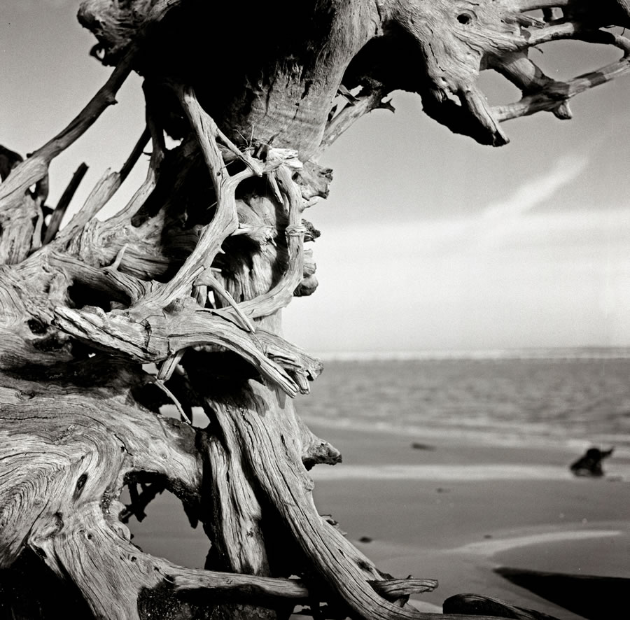 Driftwood Project #01