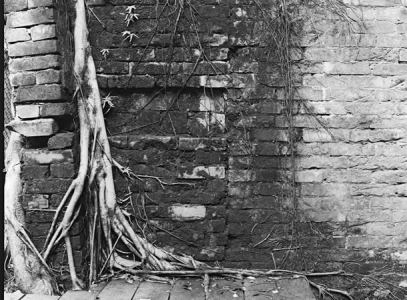 Deep-rooted - Ilford HP5+ shot at ISO1000