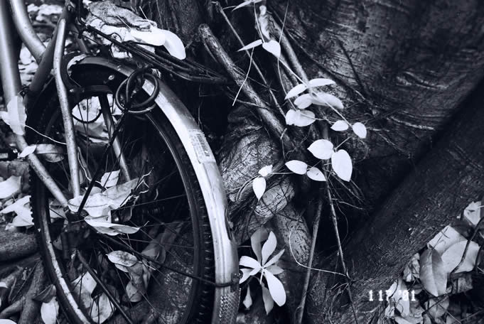 Intertwined Rollei Infrared 400 shot at ISO25