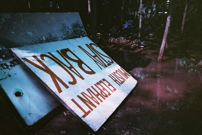 MUSTH not approach - Lomochrome Purple XR 100-400 shot at ISO400