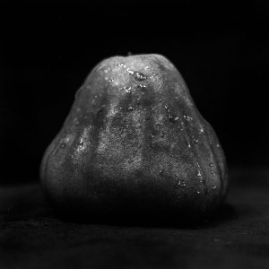 Wax apple light study #01 - Ilford Pan F Plus shot at ISO50. Black and white negative film in 120 format shot as 6x6. 32E extension tube.