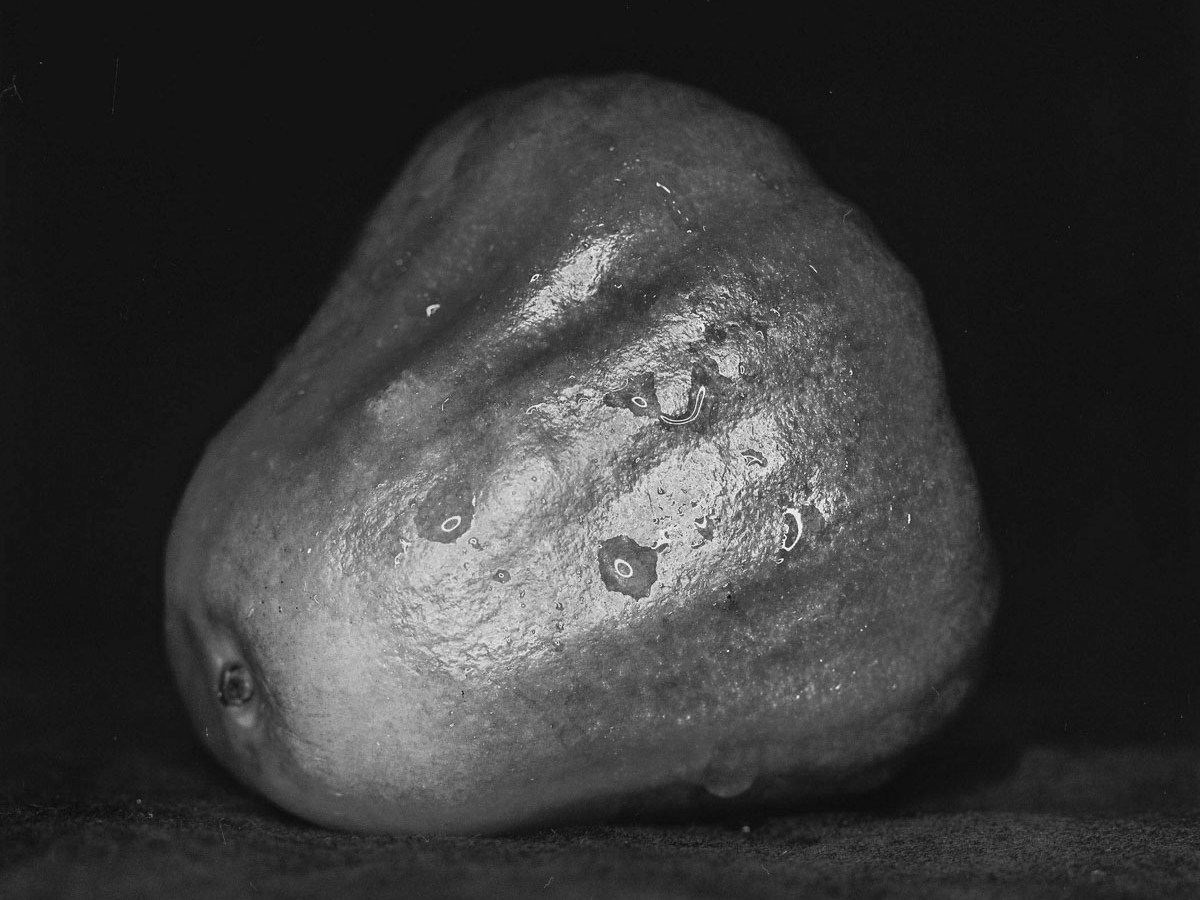 Wax apple study #02 - Ilford Pan F Plus shot at ISO50. Black and white negative film in 120 format shot as 6x6. 32E extension tube.
