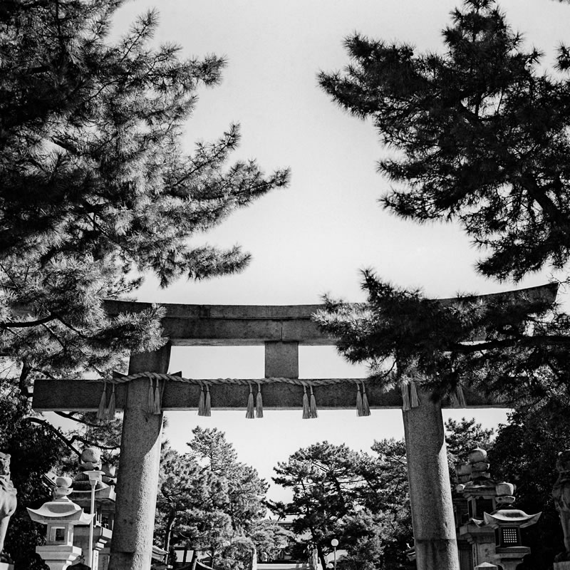 Gated entrance - Ilford XP2 Super shot at EI 200. Black and white negative film in 120 format shot as 6x6.