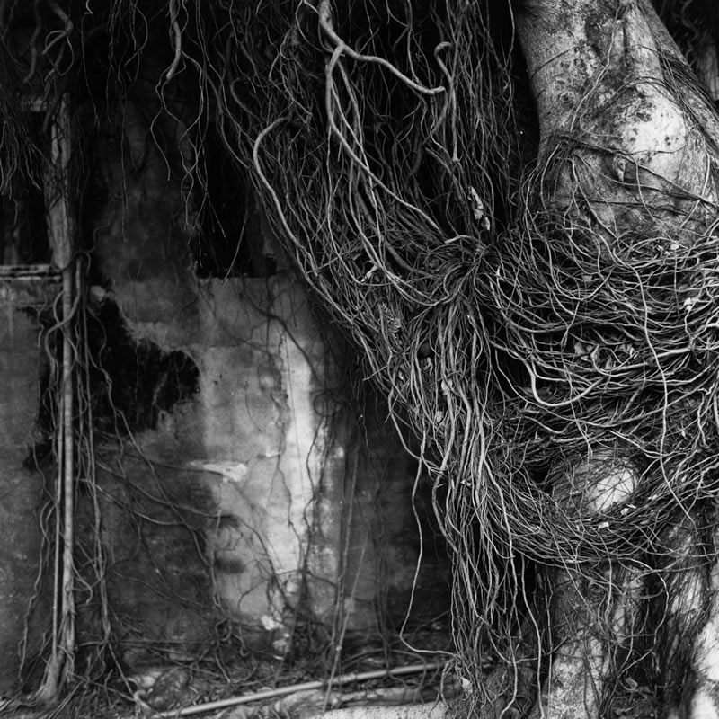 Air roots - Shanghai GP3 100 shot at EI 200. Black and white negative film in 120 format shot as 6x6.