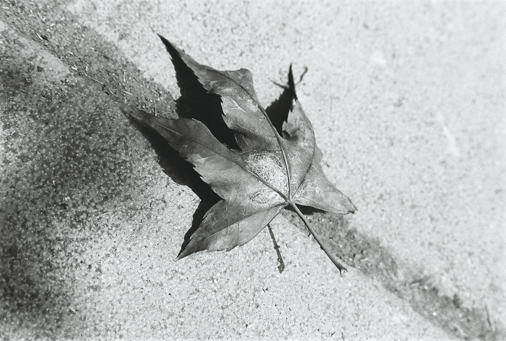 Blown over over blown - Oriental New Seagull 400 shot at EI 400. Black and white negative film in 35mm format.