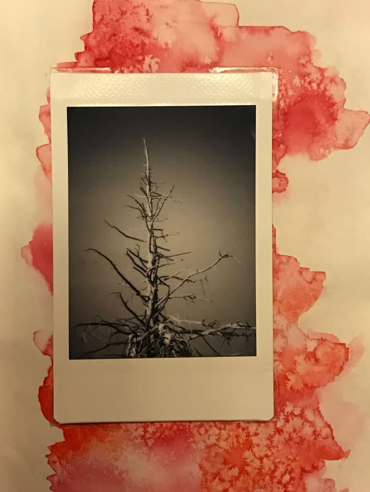 Photographer: Anne Holland Award: Best proof Title: Weathered Treetop Location: Granby, Colorado, USA Camera: MiNT InstantFlex TL70