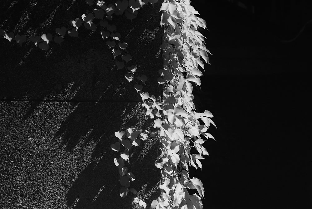 JCH Streetpan 400 - Infrared photography