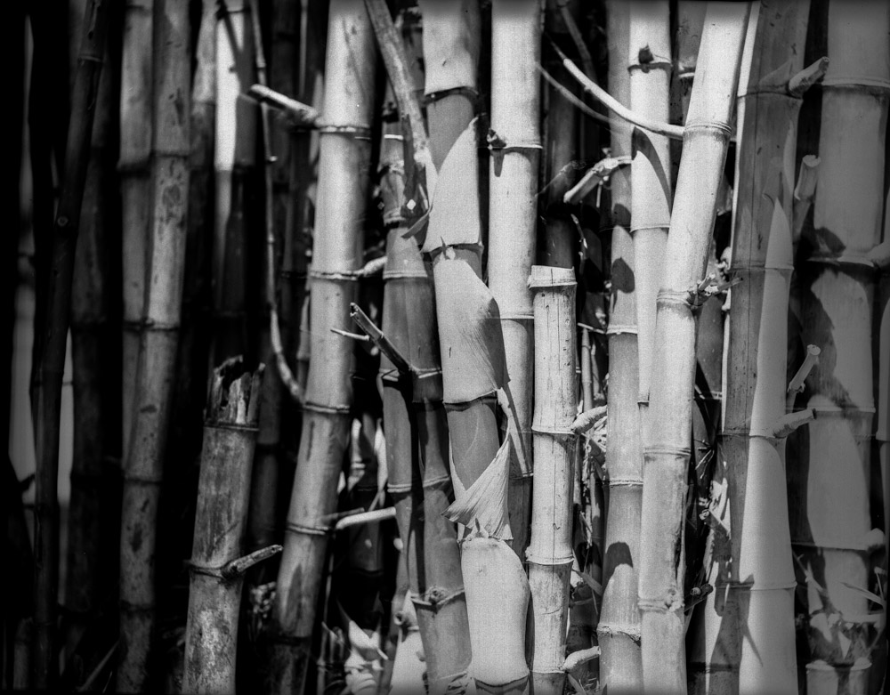 Bunched up - Shot on Rollei IR 400 at EI 12 - Black and white negative film in 4x5 format - AEROgraphic - Kodak Anastigmat 161mm f/4.5.