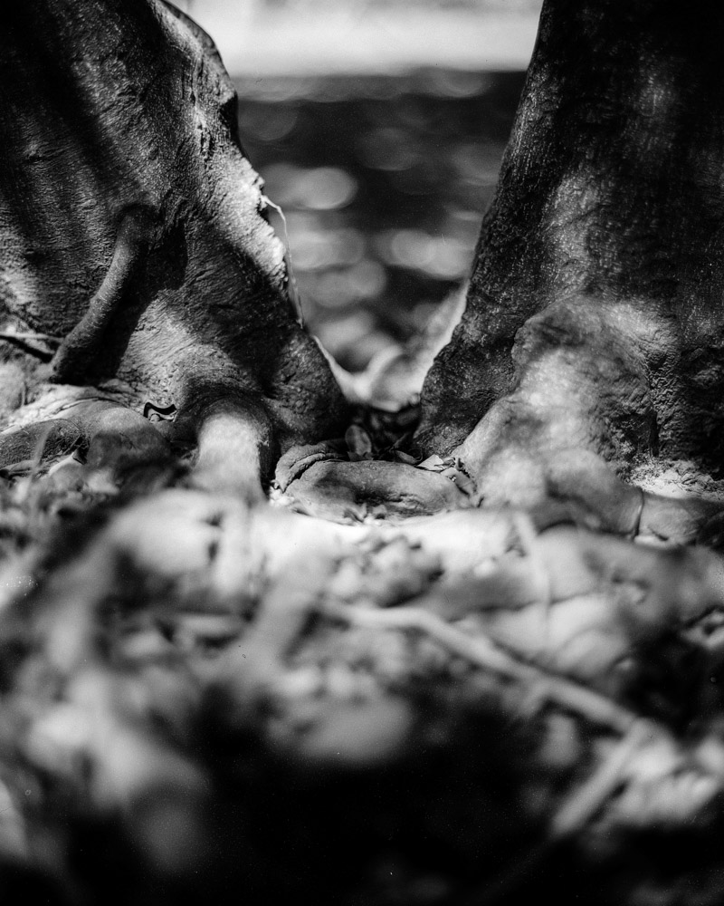 V - Fomapan 200 Creative shot at EI 200 - Black and white negative film in 4x5 format - AEROgraphic - Kodak Aero Ektar 178 f2.5 - Fomapan 200 Creative shot at EI 200 - Black and white negative film in 4x5 format - AEROgraphic - Kodak Aero Ektar 178 f2.5
