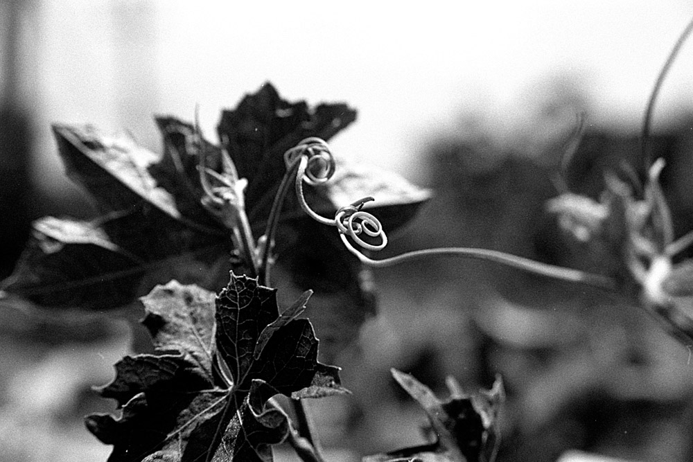 Lucky New SHD 100 EI 400 - Over exposed