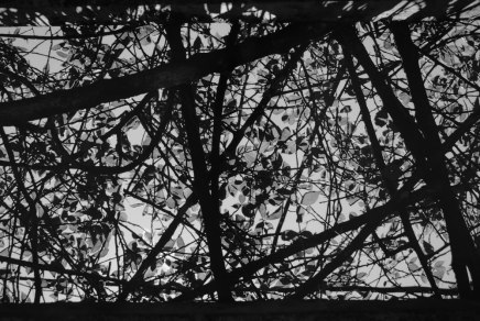 Translucent - Shot on FILM Ferrania FERRANIA P30 Alpha at EI 80. Black and white negative film in 35mm format. Reversal developed.