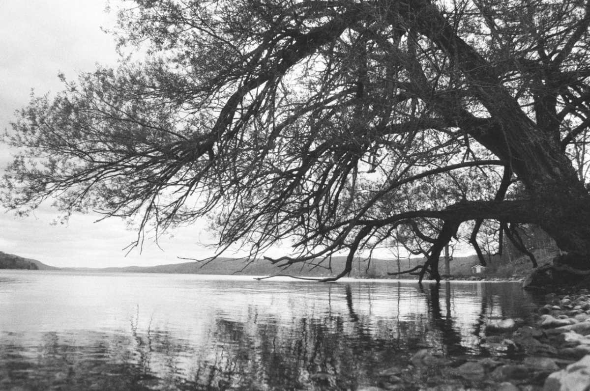 Where The Water Meets The Land, Lomography Lady Grey, ISO 100, Canon AE-1, Near Cooperstown, NY
