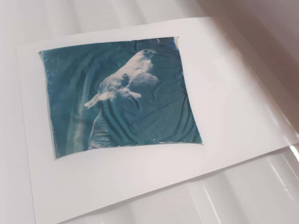 Tutorial step 3: Emulsion on paper in water