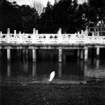 Patience pays - Shot on Shanghai GP3 100 at EI 800. Black and white negative film in 120 format shot as 6x6. Push processed 3 stops.