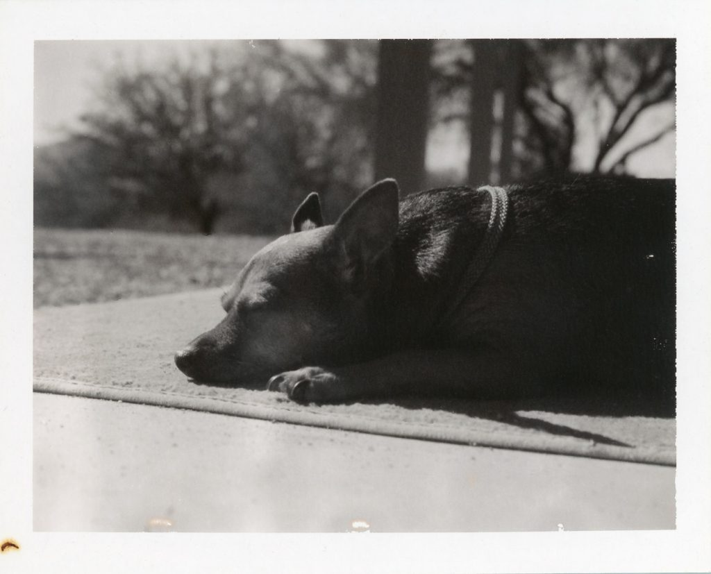 Sleeping in the sun, Polaroid Type 667 with #581 Portrait Kit