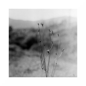5 Frames With... Kosmo Foto Mono 100 (EI 100 / 120 format / Mamiya C220) - by Matt Thompson