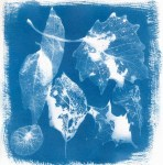 Leaf Collection - 5 Frames... With a Liquid Cyanotype Kit on Fluid Cold Press Finish Watercolor Paper - by Monika