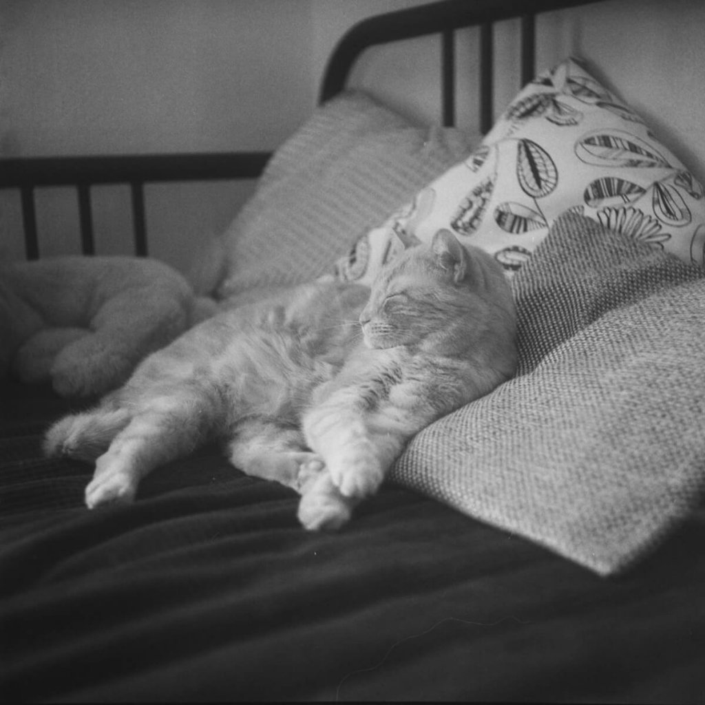 Yashica-B, Fomapan 400 Action home Developed in Ilford HC. Dylan, the cat, posing for its new favourite toy