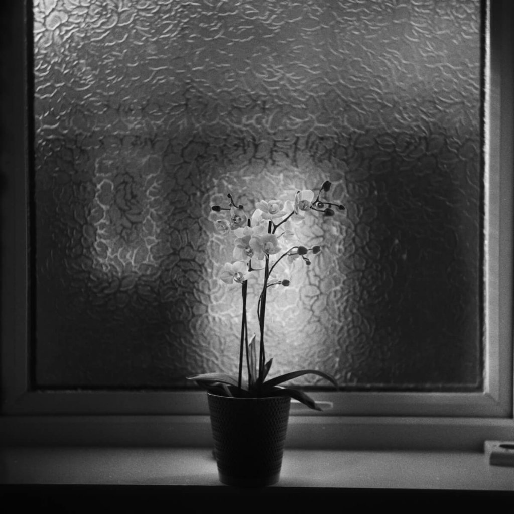 Yashica-B, ILFORD HP5 PLUS home Developed in Ilford HC. An orchid on a window sill