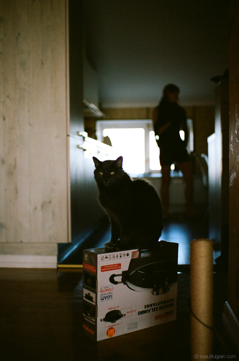 5 Frames... Of Cats that will (apparently) save film forever (Pentax MZ-3, Pentax-FA 43mm F1.9, Kodak Portra 400) - by Aivaras Sidla