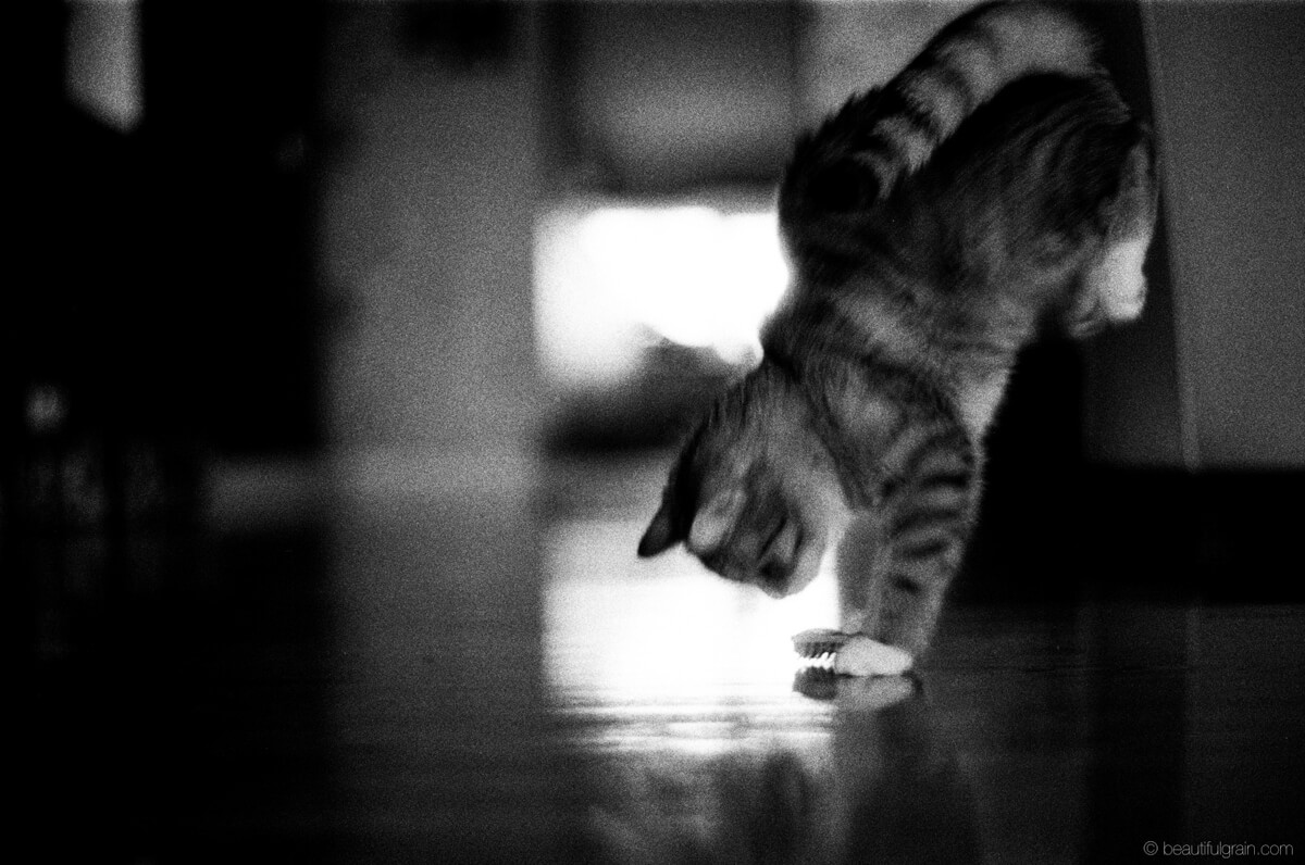 5 Frames... Of Cats that will (apparently) save film forever (Pentax SuperA, Pentax-F 50mm F1.7, Ilford Delta 3200) - by Aivaras Sidla