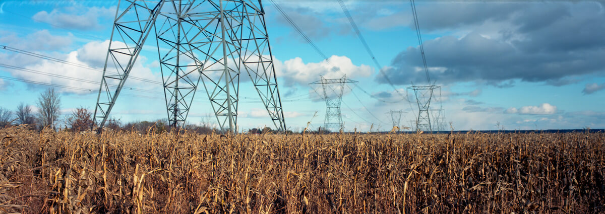 Power lines through a cornfield - PressPan