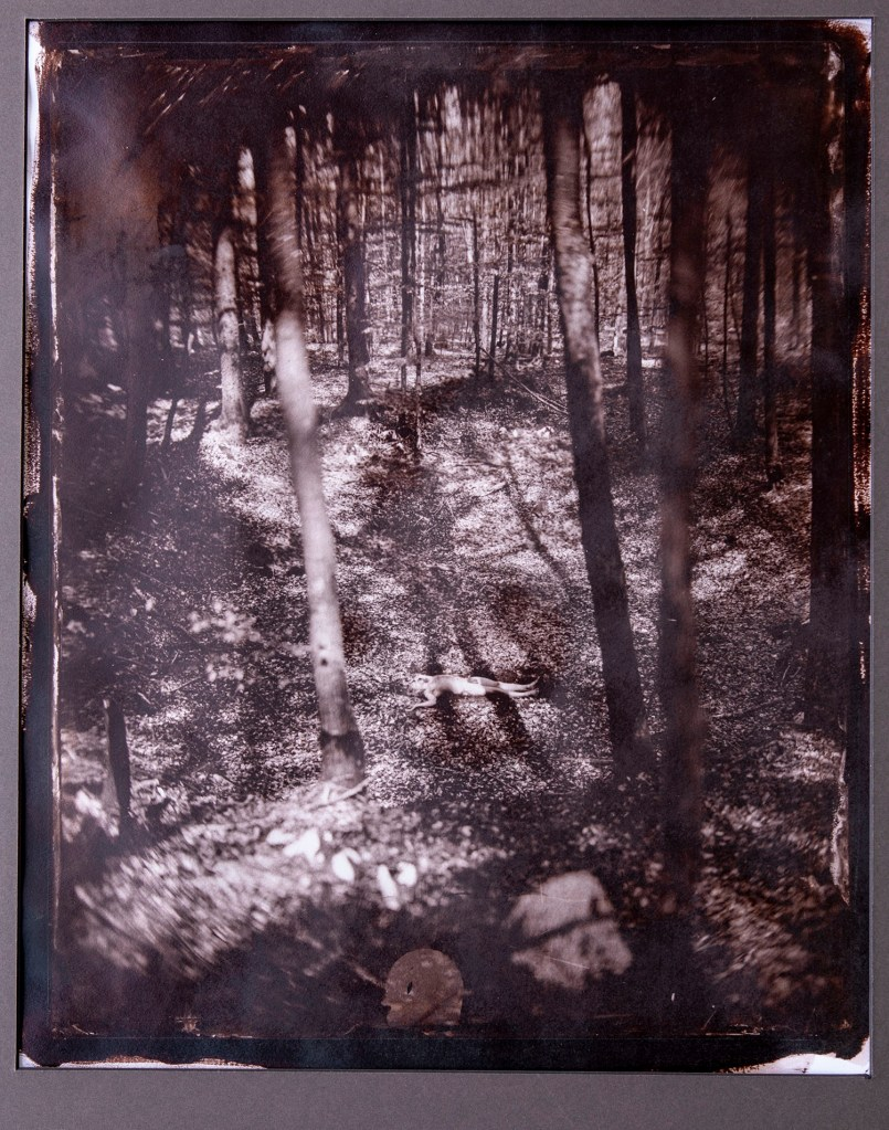 A print from a wet plate collodion photograph of a man laying naked on the ground in the middle of a forest