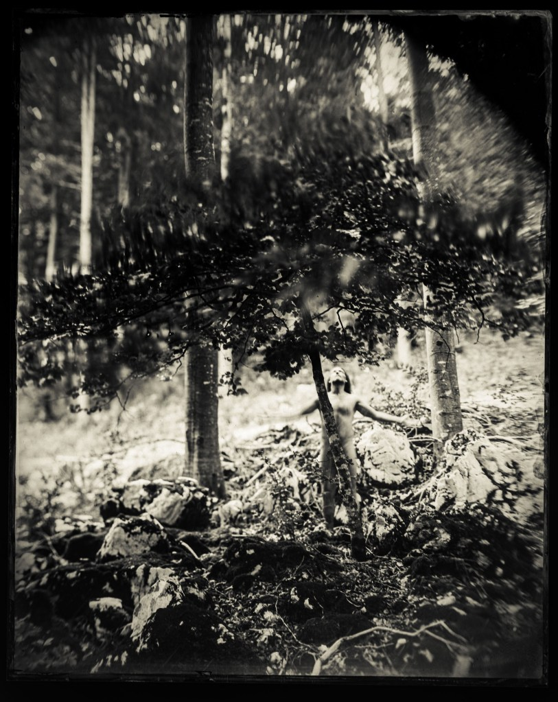 A print from a wet plate collodion photograph of a man standing naked in front of a tree
