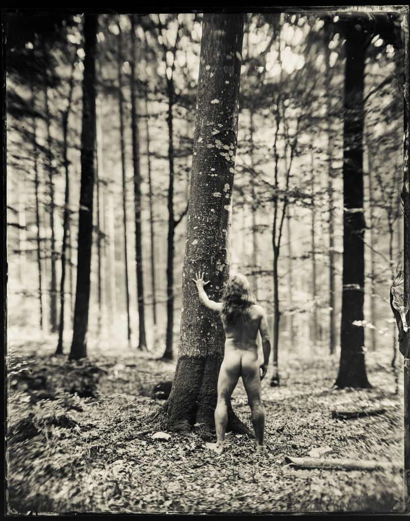 A print from a wet plate collodion photograph of a man standing naked with his hand on a tree in the middle of a forest