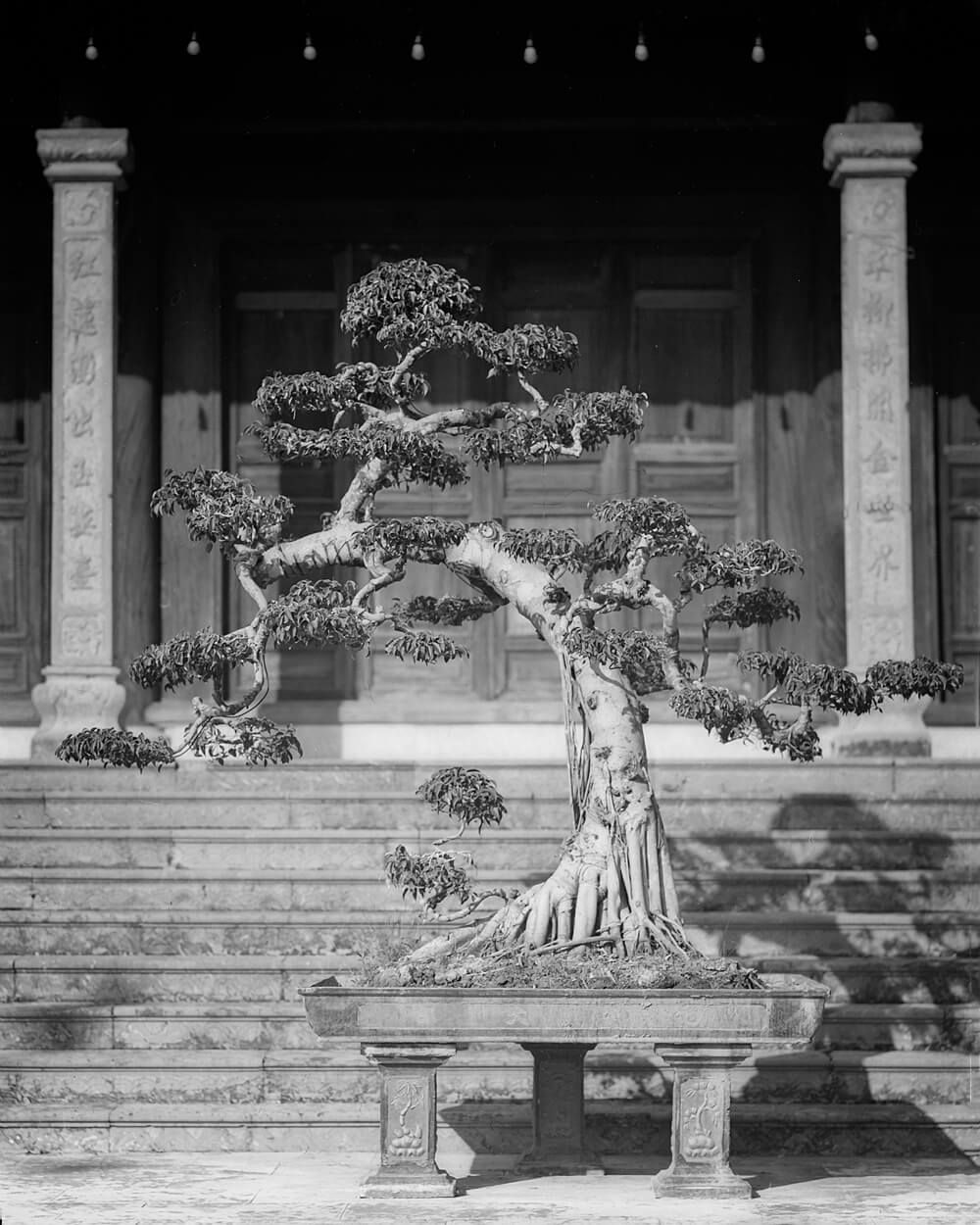 Sculptured Bush 2 - 5 Frames... Around Hai Phong, Vietnam on my 1920 Graflex RB Tele 4x5 and ILFORD HP5 PLUS (4x5 Format / EI 400 / Voigtlander Heliar 210mm f/4.5 c.1920 lens) - by Stuart Kinkade