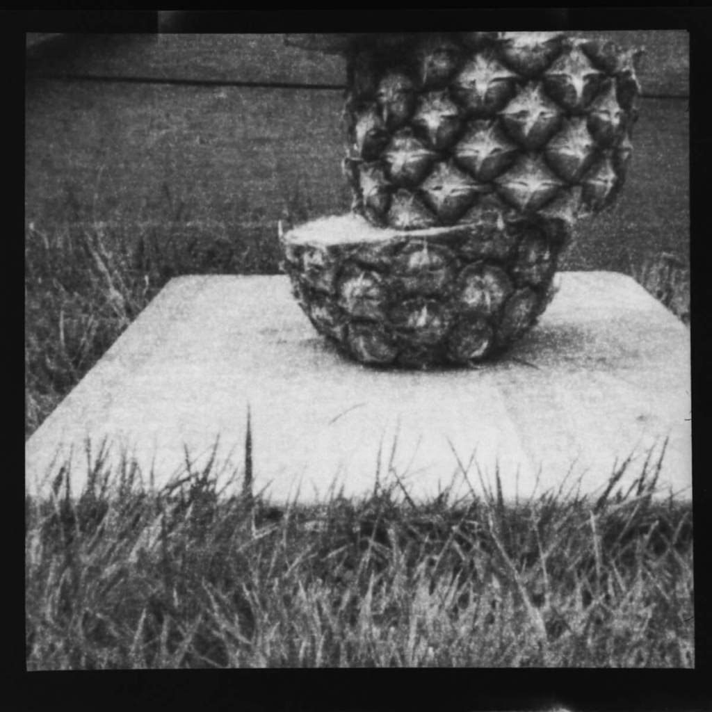 Pineapple With Poor Composition - ILFORD Pan F PLUS