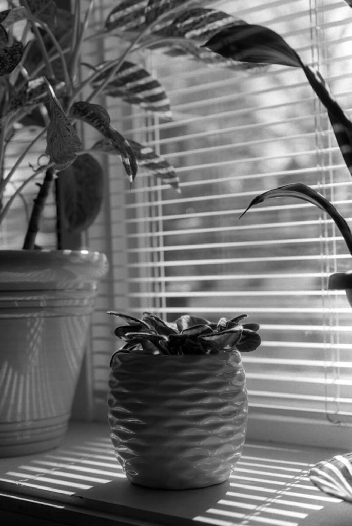 5 Frames... Shot at home during stay-at-home (ILFORD FP4 PLUS (35mm Format : EI 125 : Nikon N90S + Nikkor 50mm 1.8 AF) - by Josh Vrolyk