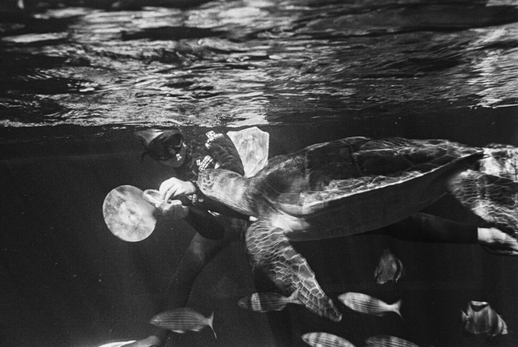 Bob the turtle busy with its enrichment course by Willem van den Heever